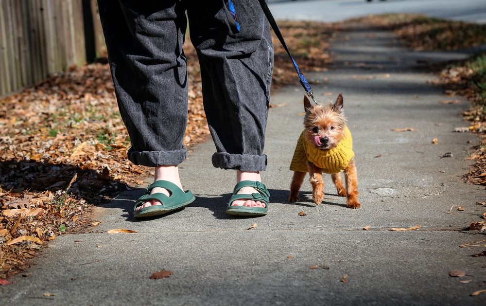 Kursten Hedgis walks her dog Bitsy in front of her home Dec. 9, 2020, in Decatur, Ga. Hedgis says Bisty's behavior changed when Hedgis began working from home early in 2020 because of the new coronavirus pandemic. (AP Photo/Ron Harris)