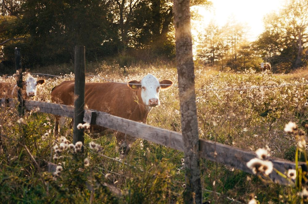 Is it worth it to pay more for organic meat?