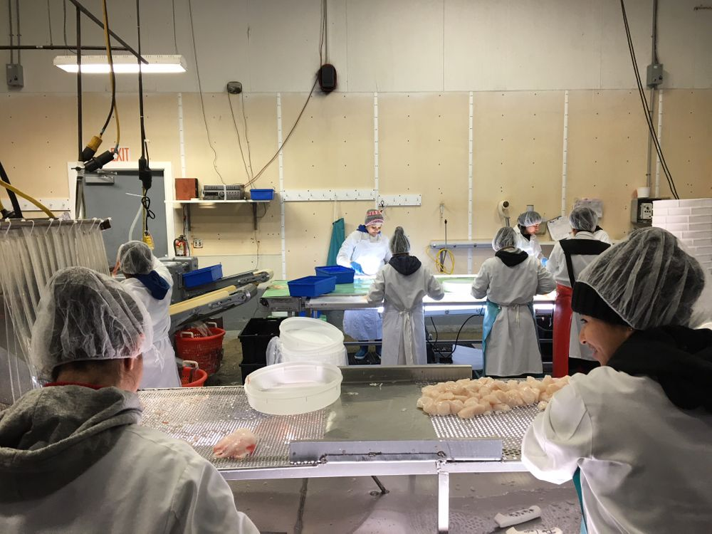 Workers examine seafood for imperfections at Bergie's in New Bedford. January 2018.