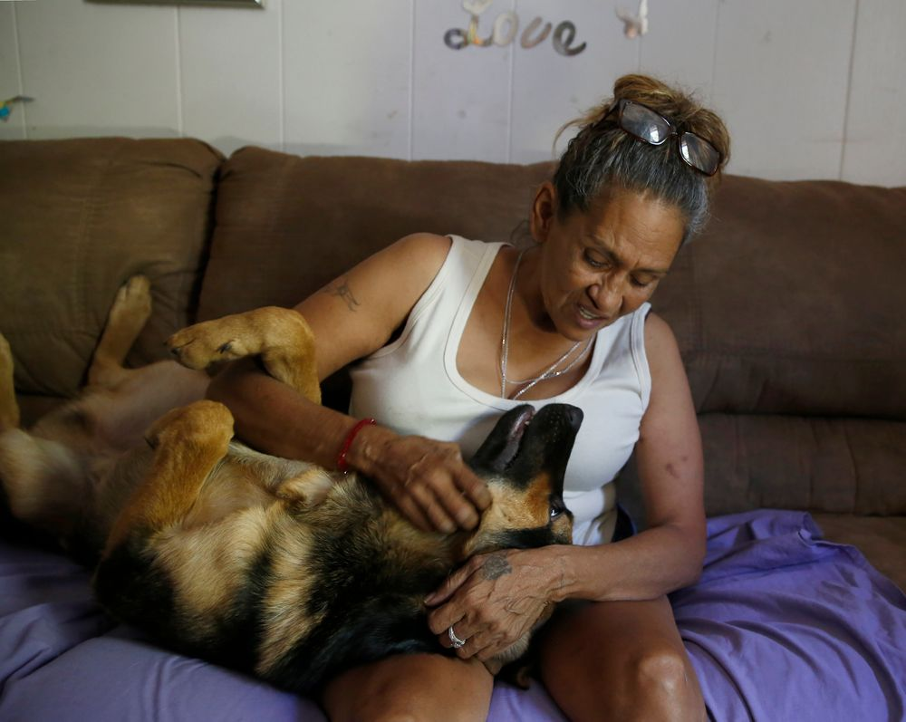 In this photo taken Wednesday, Aug. 14, 2019, Susie Garza plays with her dog, Duke, at her home in Stockton, Calif. When Duke needed surgery, Garza was able to make payments on the bill by a city provided debit card she receives monthly through a trial program. Garza is participating in the Stockton Economic Empowerment Demonstration. The program, which started in February, gives $500 a month to 125 people who earn at or below the median household income of $46,033. They can spend the money with no restrictions. Stockton Mayor Michael Tubbs, who initiated the privately funded program, says it could be a solution to the city's poverty problem. (AP Photo/Rich Pedroncelli)