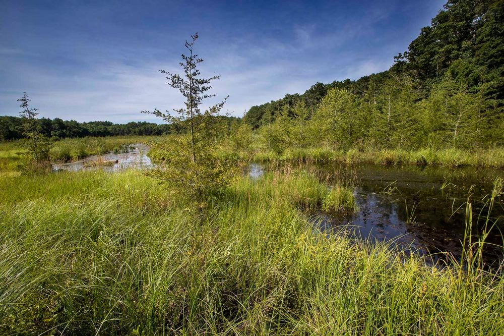 The Eel River Headwaters Preserve, where 40 acres of retired cranberry bogs were restored to wetland nearly a decade ago.