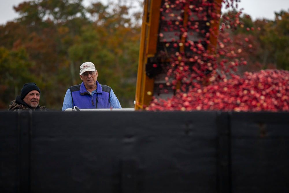 Jeff Kapell, right, watches as cranberries are loaded onto a truck at his bog. Kapell will retire the bog next year, and it will be converted to wetlands.