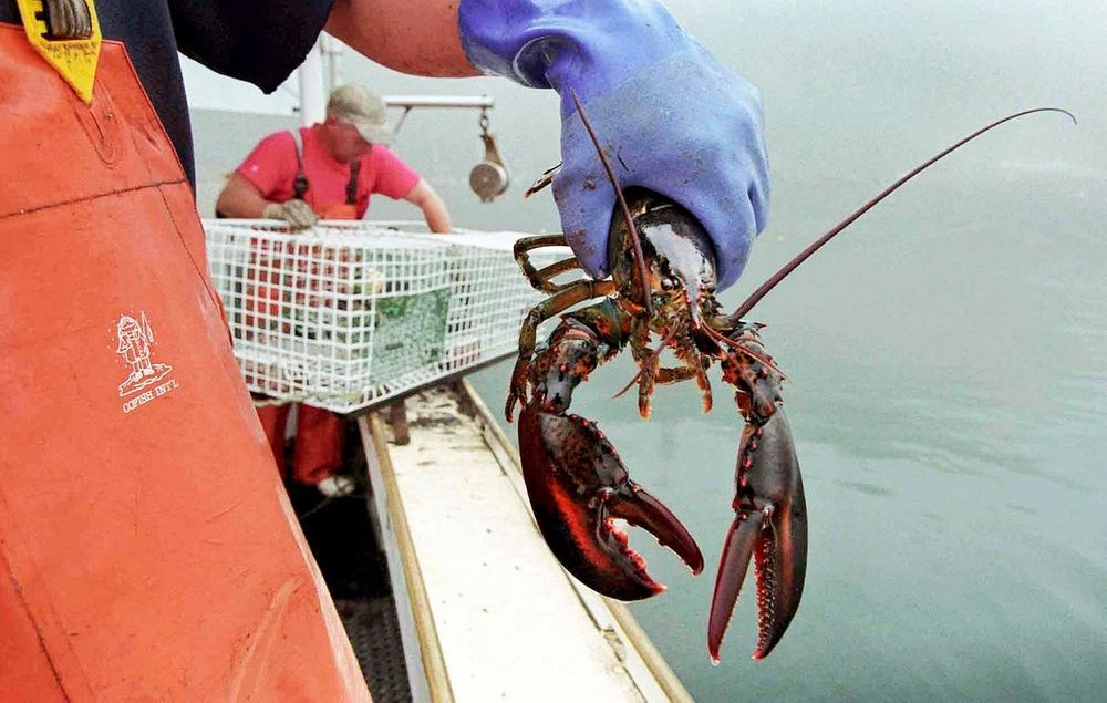 As The Gulf Of Maine Warms, Lobstermen Explore Different Fisheries