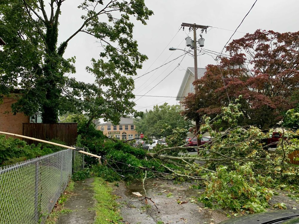 A tree downed by Tropical Storm Henri brought down power lines in Newport.
