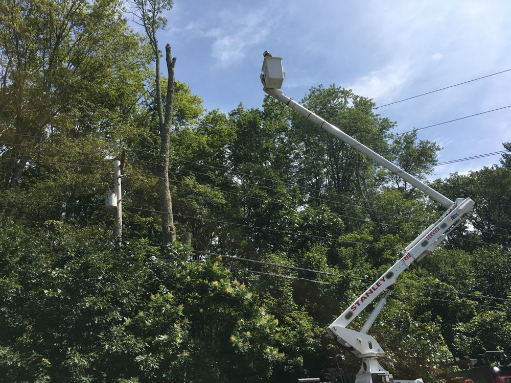 A crew works to remove an ash tree infested by emerald ash borer in western Rhode Island.